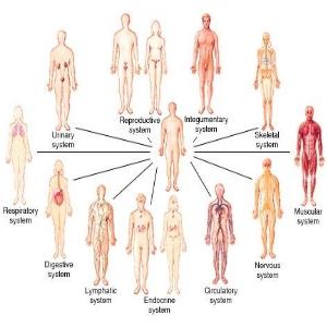 κλινική ρεφλεξολογία,ειδίκευση,μετεκπαιδευτικό πρόγραμμα,ρεφλεξολογία,επαγγελματικη εξειδικευση, Κλινική Ρεφλεξολογία, Health Studies – integrated (HSi)